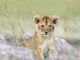 które dzikie zwierzę drzemie w tobie